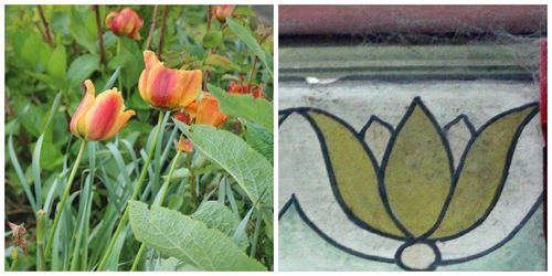 Sligo tulip Collage